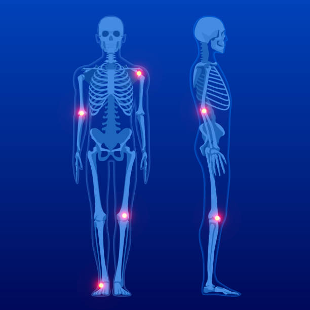 Human skeleton in front and profile. Human Skeleton Anatomy X-ray. Human skeleton in front and profile. Human Skeleton Anatomy X-ray lateral surface stock illustrations