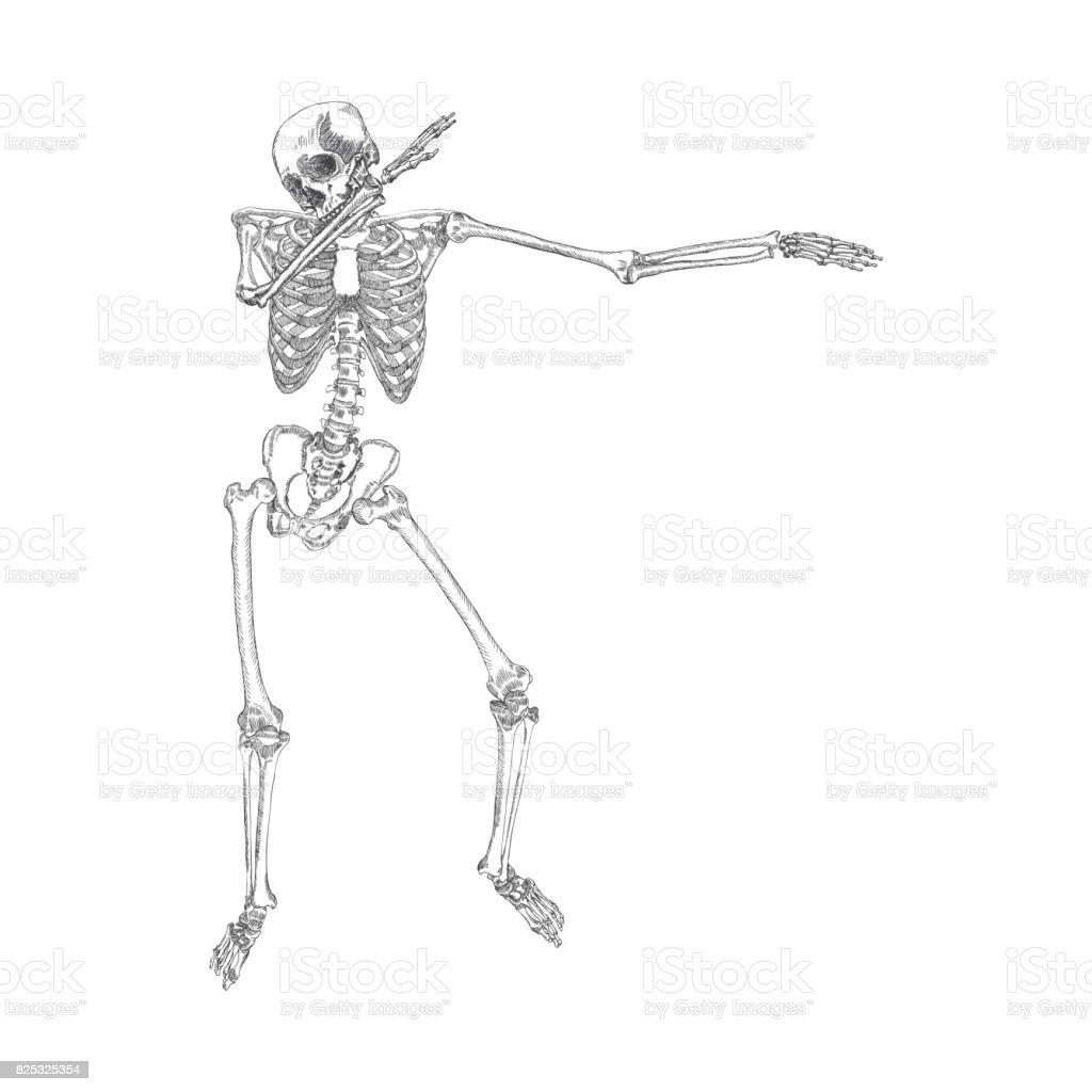Menschliches Skelett Zu Dab Führen Betupfen Tanz Bewegung Geste ...