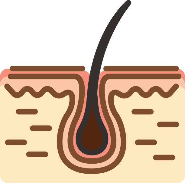 Human Skin section Stylized Human Skin section with hair. Thin line linear vector illustration root hair stock illustrations