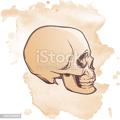 istock Human Skull hand drawing. Side angle. Linear drawing painted in 3 shades, isolated on grunge textured background 1052008992