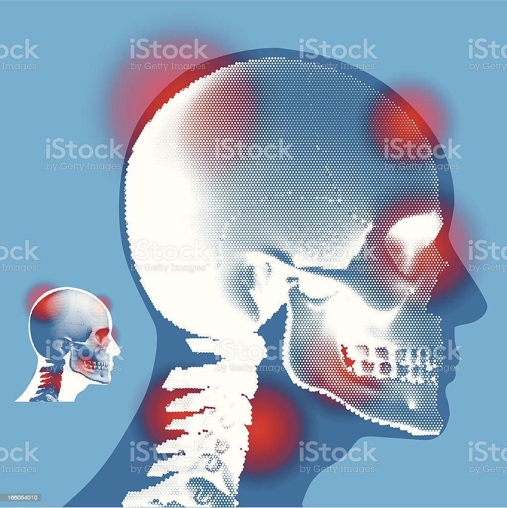 Human Skull - Side View royalty-free stock vector art