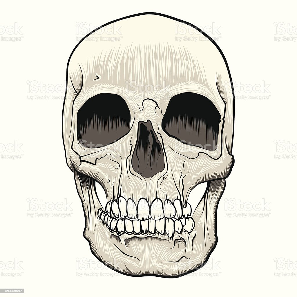 Human Skull vector art illustration