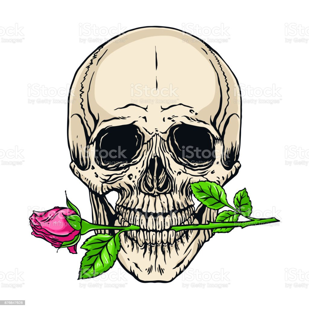 human skull with a rose vector art illustration