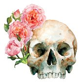 Human Skull With Pink Roses, Vector Illustration.