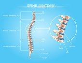 Human Spine Anatomy Vector Medical Infographic