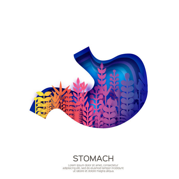 Human Stomach in paper cut style. Purple origami layered organ with colorful leaves on white background. Human Stomach in paper cut style. Purple origami layered organ with colorful leaves on white background. Vector. abdomen stock illustrations