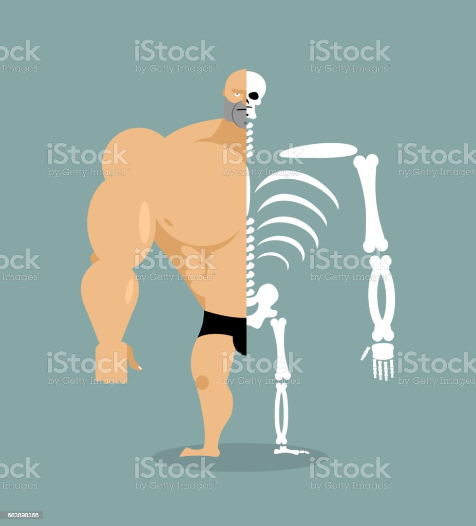 human structure. Skeleton men. construction of athlete. Bones and skull. Athlete internal organs. Human bone system. Anatomy bodybuilder. vector art illustration