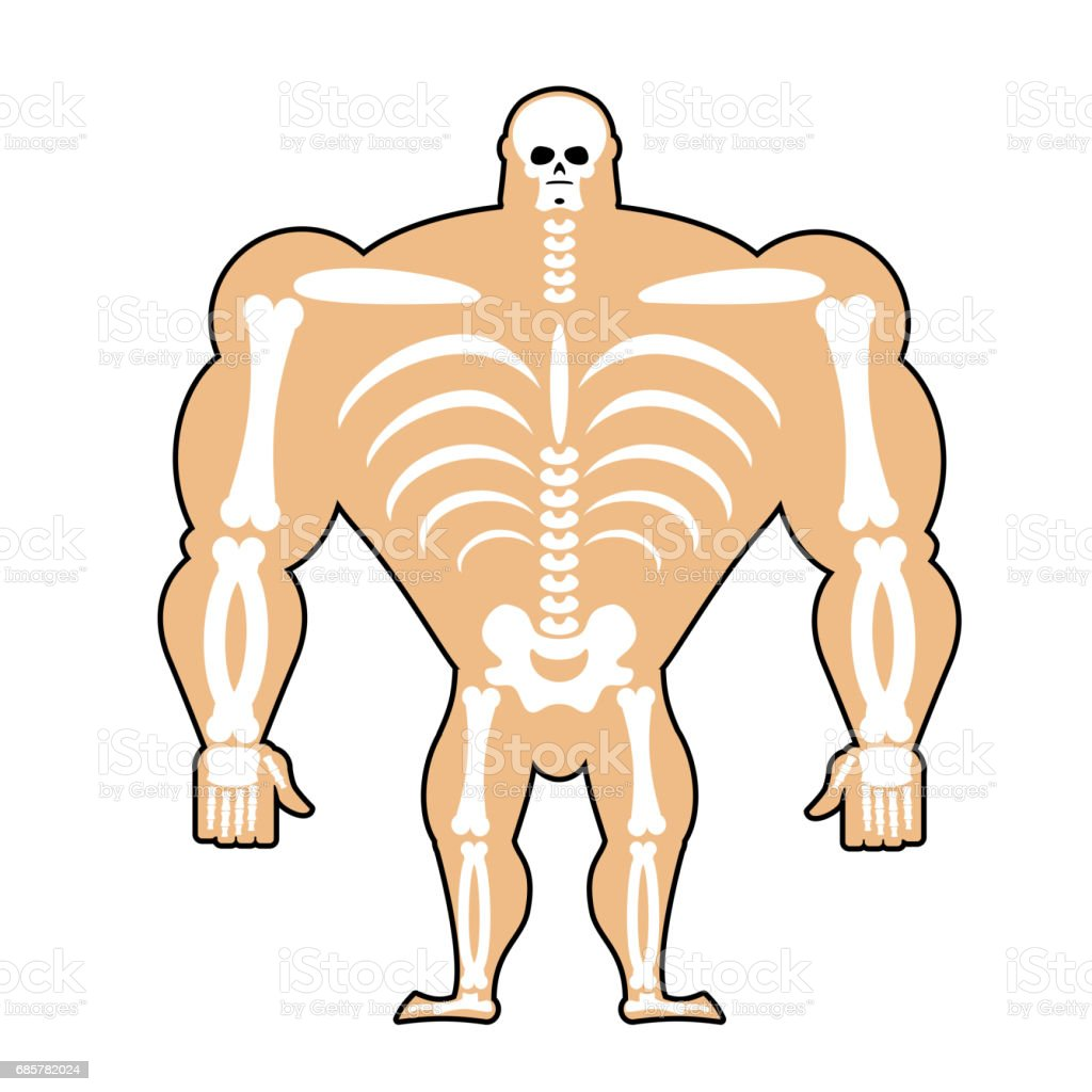 Human Structure Skeleton Men Construction Of Athlete Bones And Skull