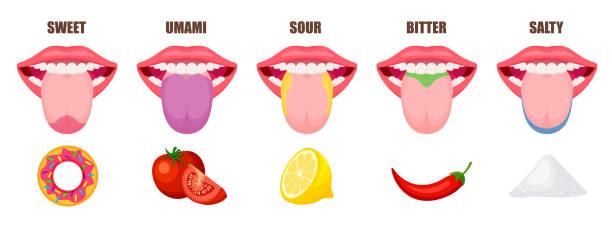 illustrazioni stock, clip art, cartoni animati e icone di tendenza di human tongue basic taste areas. - lingua umana