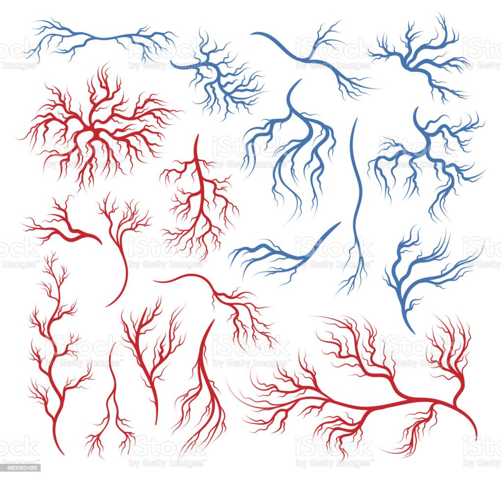 Human Veins And Arteries Stock Vector Art More Images Of Abstract