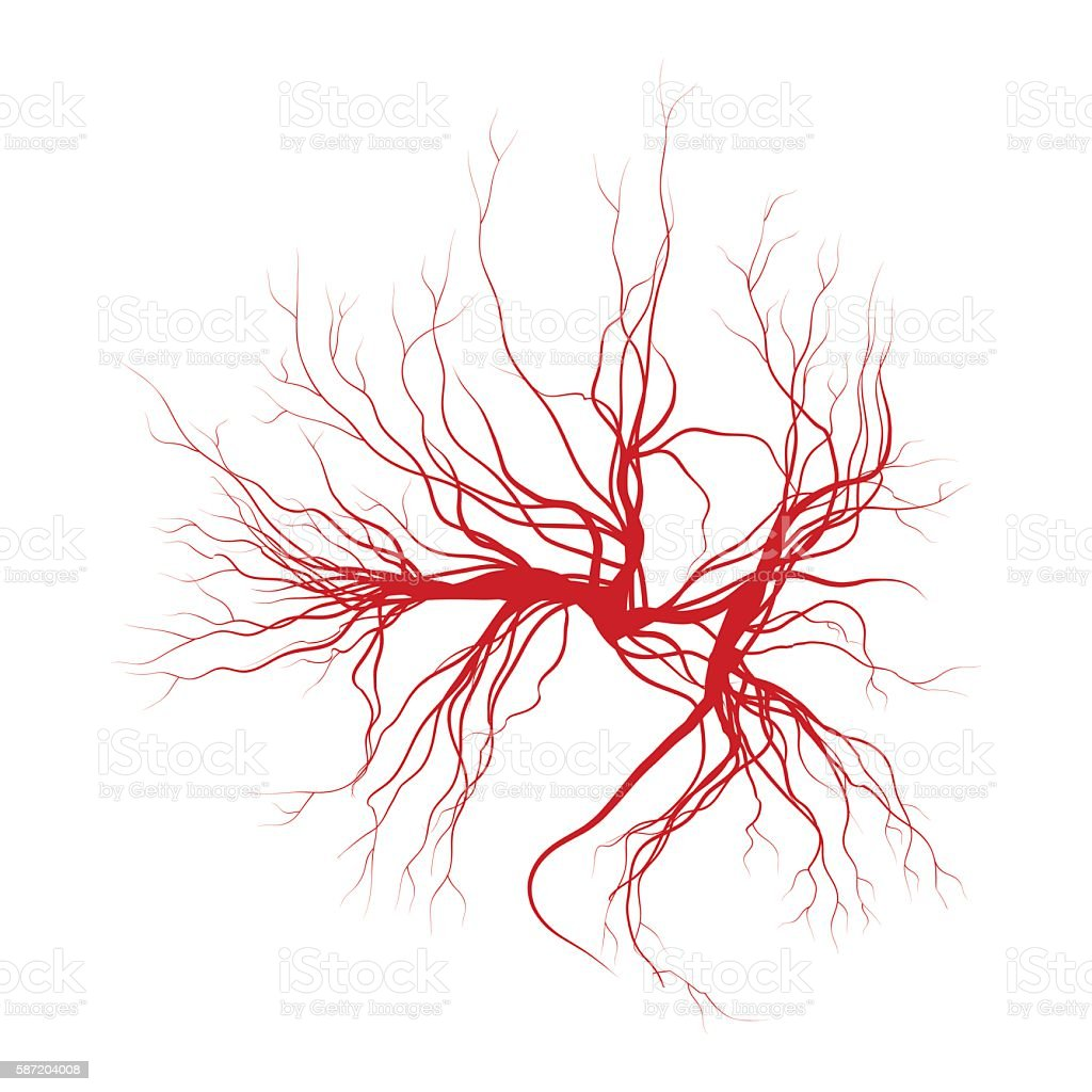 human veins, red blood vessels design. Vector illustration vector art illustration