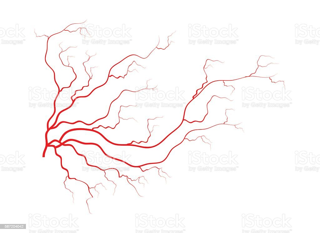 Human Veins Red Blood Vessels Design Vector Illustration Stock