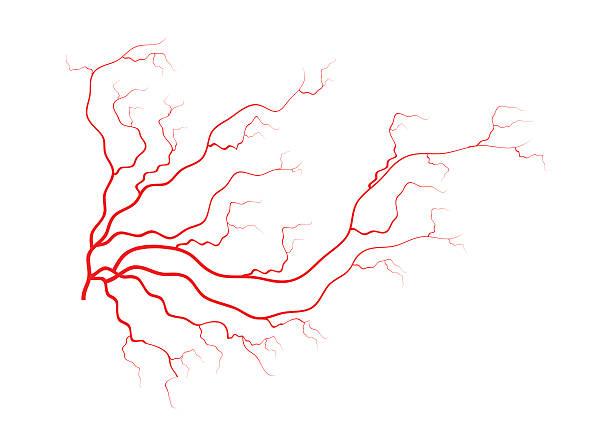 stockillustraties, clipart, cartoons en iconen met human veins, red blood vessels design. vector illustration - bloedvat