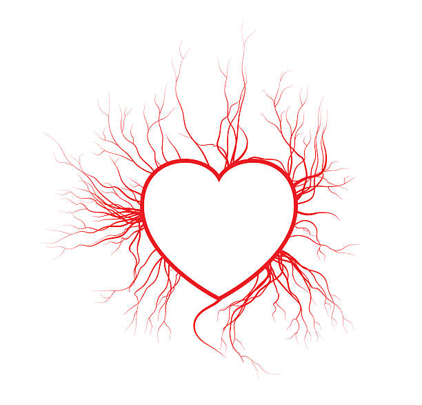 human veins with heart, red love blood vessels valentine design. vector art illustration