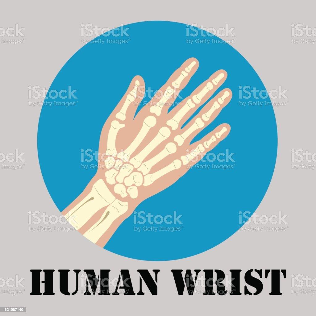 Menschlichen Handgelenk Emblem Stock Vektor Art und mehr Bilder von ...