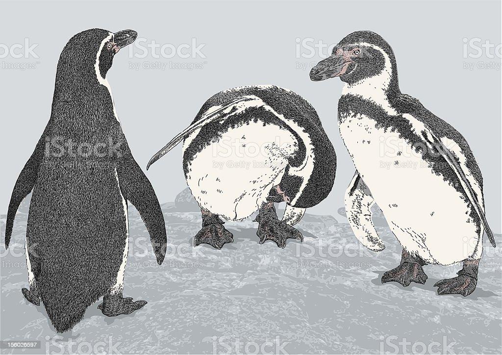 Humboldt Penguins royalty-free stock vector art