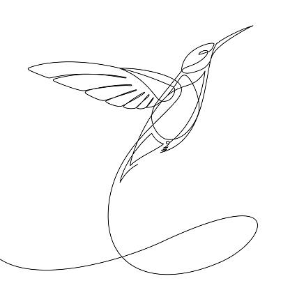 Humming Bird Continuous Line Vector — стоковая векторная графика и другие изображения на тему Абстрактный