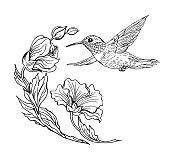 Free download of Black Hummingbird Tattoo vector graphics