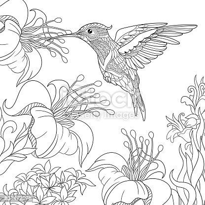Ilustración de Colibrí Con Flores De Hibiscus y más banco de ...