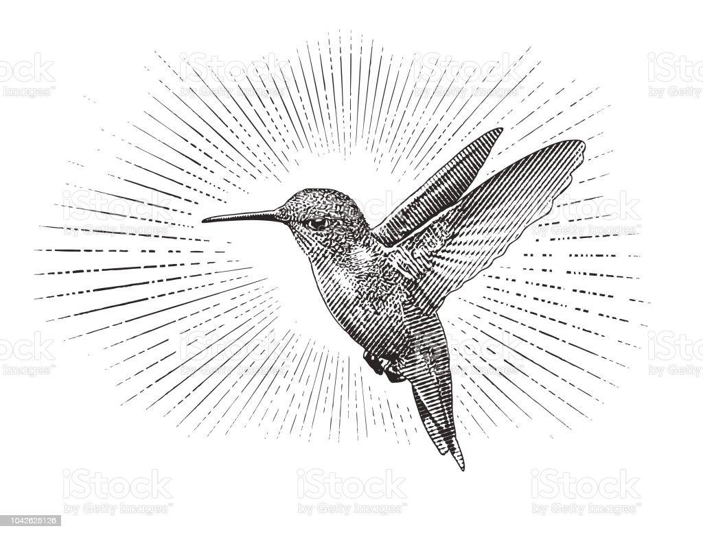 Hummingbird flying vector art illustration