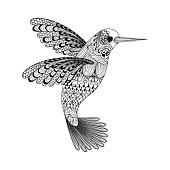 Hummingbird. Hand Drawn vector illustra