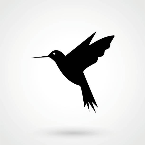 hummingbird icon - vector illustrator - hummingbird stock illustrations