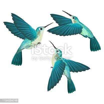 Hummingbird isolated.Vector illustration. EPS 10