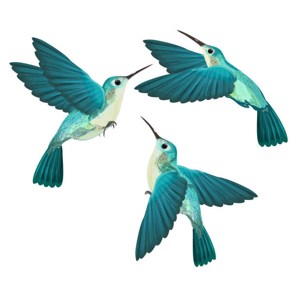 hummingbird isolated. - hummingbird stock illustrations