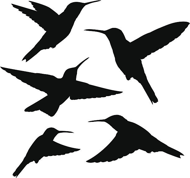 hummingbird silhouettes - hummingbird stock illustrations