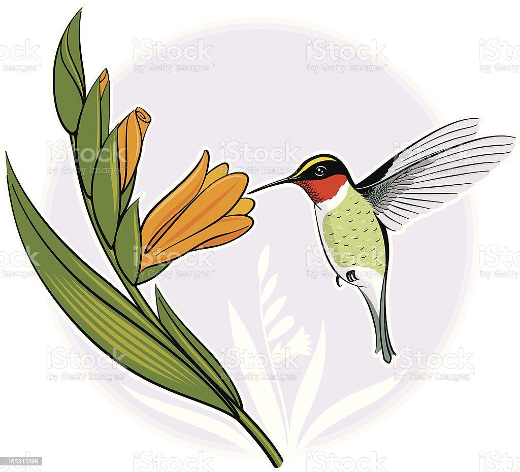 Hummingbird royalty-free stock vector art