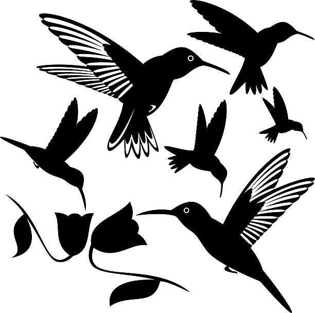 Hummingbird vector art illustration