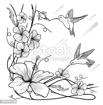 Humming-birds and flowers on a white background, artline, vector