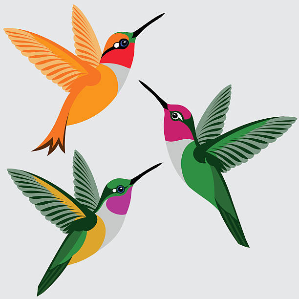 hummingbirds set - rufous hummingbird, anna's hummingbird, bahama woodstar hummingbird - 鳥点のイラスト素材/クリップアート素材/マンガ素材/アイコン素材