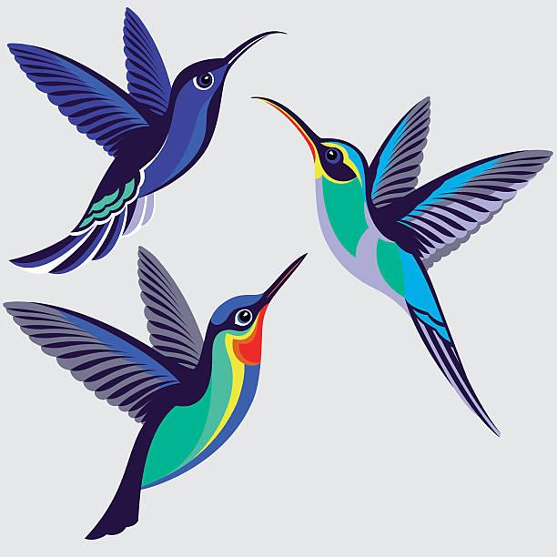 hummingbirds set - violet sabrewing, green hermit, fiery-throated hummingbird - hummingbird stock illustrations