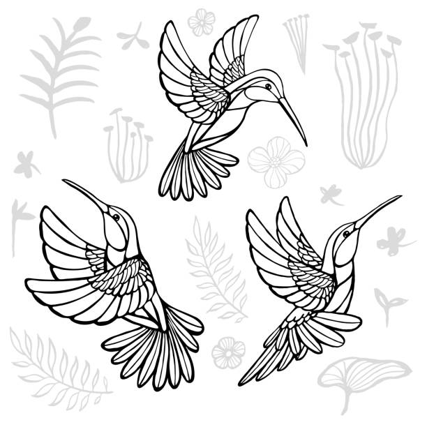 Hummingbirds with floral elements black birds in lines on white background tattoo sketch style. Hand drawn vector illustration. Hummingbirds with floral elements black birds in lines on white background tattoo sketch style. Hand drawn vector illustration. hummingbird stock illustrations