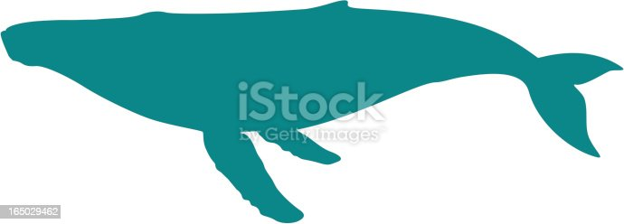 Humpback whale swimming, full side view, tail down, silhouette illustration. High resolution transparent PNG also included. If you like this image, you may also like my