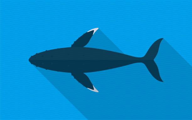 buckelwale schwimmen im meer, tierische flache ikone - wal stock-grafiken, -clipart, -cartoons und -symbole