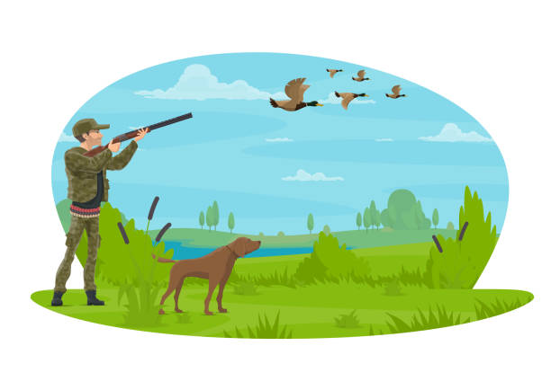 Hunter and hunt for ducks vector poster design Hunter hunting ducks in forest with hunting dog. Vector flat poster design of hunter man with rifle in camouflage outfit on hunting open season for wild duck or goose in nature park hunt ducking stock illustrations