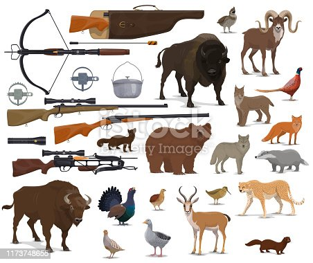 Hunt animals and hunter ammo equipment. Vector isolated hunting traps, rifle carbine and crossbow, bear or buffalo and wild duck or grouse birds with African safari cheetah and ermine
