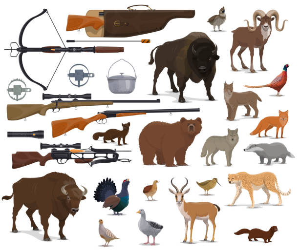 Hunting ammo, hunter trophy animals Hunt animals and hunter ammo equipment. Vector isolated hunting traps, rifle carbine and crossbow, bear or buffalo and wild duck or grouse birds with African safari cheetah and ermine ermine stock illustrations
