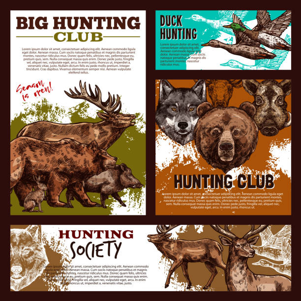 Hunting banner with wild animal and bird sketch Hunting banner template with wild animal and bird sketch. Forest deer, duck and bear, wolf, reindeer and elk, boar and hare for duck hunting open season poster or hunter sport club promo flyer design ducking stock illustrations