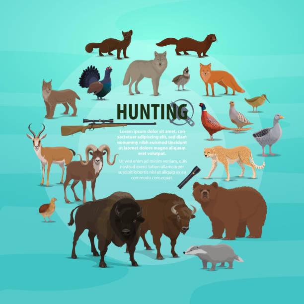 bildbanksillustrationer, clip art samt tecknat material och ikoner med jakt byte och gun affisch med djur och gevär - tjäder