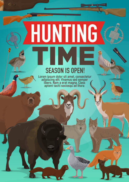 Hunting time and hunt open season animals poster Hunt open season poster of wild animals and forest birds for African safari adventure. Vector design of hunter rifle gun for buffalo, mountain sheep or gazelle and grouse with ermine and mink ermine stock illustrations