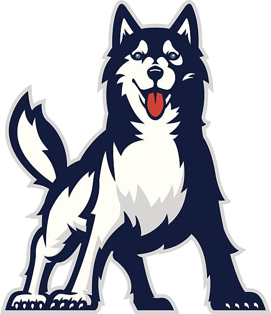Huskie mascot Stylized powerful huskie mascot. All colors are separated in layers. Easy to edit. Black and white version (EPS8,JPEG) included. husky dog stock illustrations
