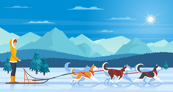 huskies hound dog arctic