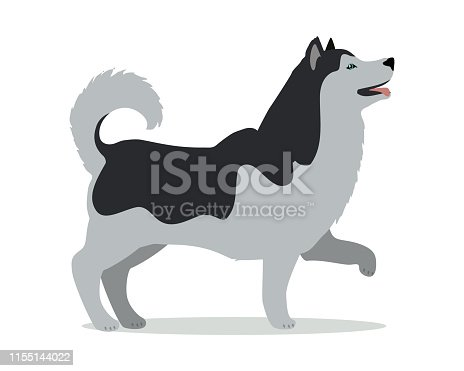 Black and white huskies in stand on white background. Dog icon or logo element. Vector illustration in flat style. Side view siberian husky dog design. Cartoon character, pet animal.