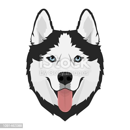 Black and white Siberian husky with blue eyes and tongue out. Husky dog head. Vector illustration