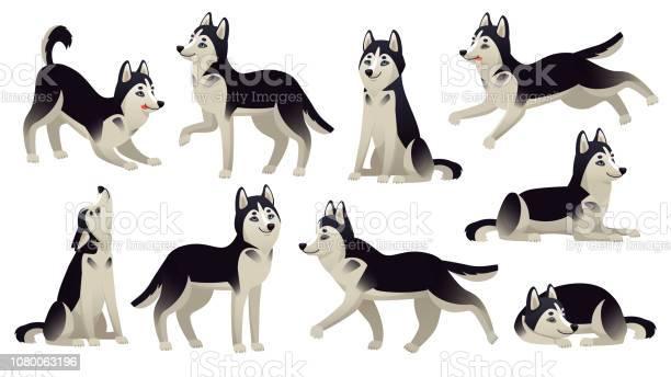 Husky dog poses cartoon running sitting and jumping dogs active vector id1080063196?b=1&k=6&m=1080063196&s=612x612&h=okp6uvbrxugoev fkp60dfjec8twk5hriesogbiffey=