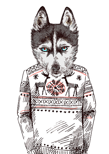 Husky in knitted sweater
