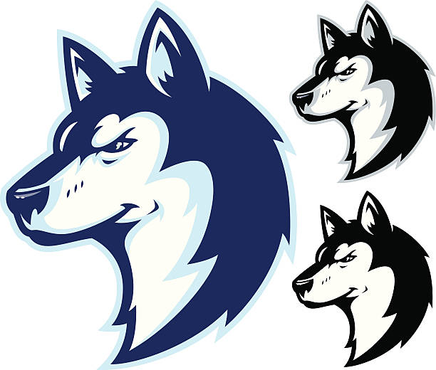 Husky Power II Mascot This is an illustration of a Husky head. Simple and easy to edit with NO GRADIENTS. All secondary color levels are removable down to a simple flat color image. The file is provided as an Illustrator 8 EPS and a 300dpi high-rez jpg. mascot stock illustrations
